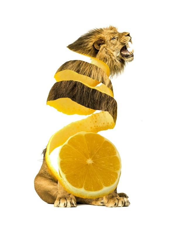 06-limon